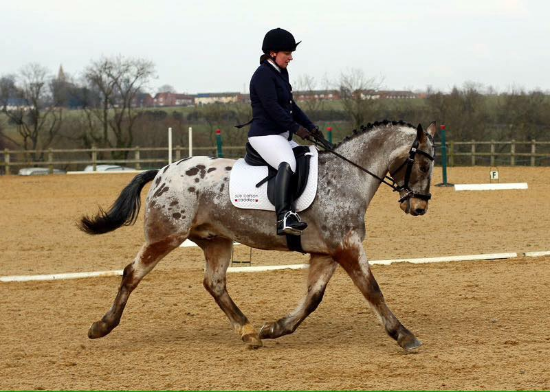 Times for Dressage – Sun 11th February